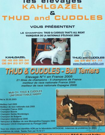bull-terrier-elevage-THUD-AND-CUDDLES